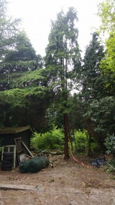 Tuinonderhoud - Bomen snoeien / kappen - SDT Onderhoud - Drenthe - Overijssel - Groningen