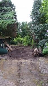 Tuinonderhoud - Bomen snoeien / vellen - SDT Onderhoud - Drenthe - Overijssel - Groningen